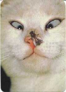 cat staring at bee on nose
