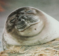 smiling and blinking seal